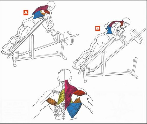 Мышцы спины как накачать спину в домашних условиях